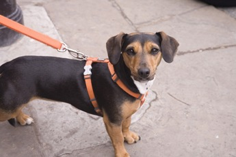 Was sollen Hundebesitzer jetzt beachten?