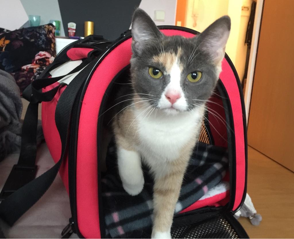 Wie trainiere ich die Katze für die Transportbox?