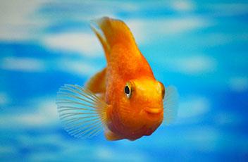fische-aquarium