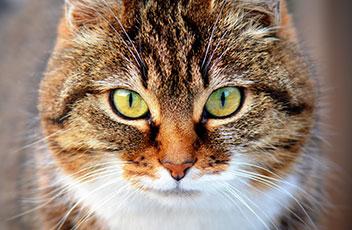 Neu im Sortiment für Katzen