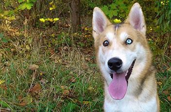 wisen-impfungen-hund