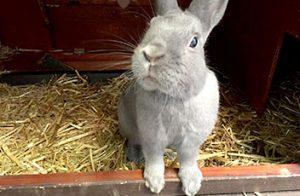 kaninchen-neugierig